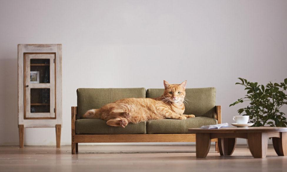 专门为猫设计的日系小型家具