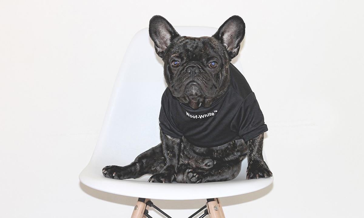 给宠物买衣服,你舍得花多少钱?