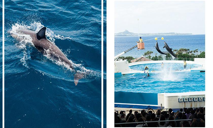 全球最大旅游平台 TripAdvisor 宣布停售圈养鲸豚的游乐设施门票