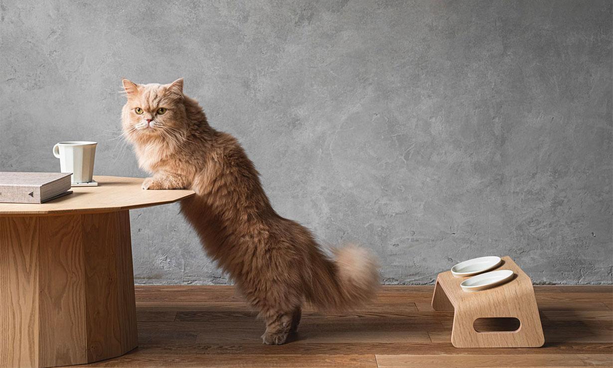 日本传统木制家具品牌 Karimoku Furniture 推出「猫餐桌」
