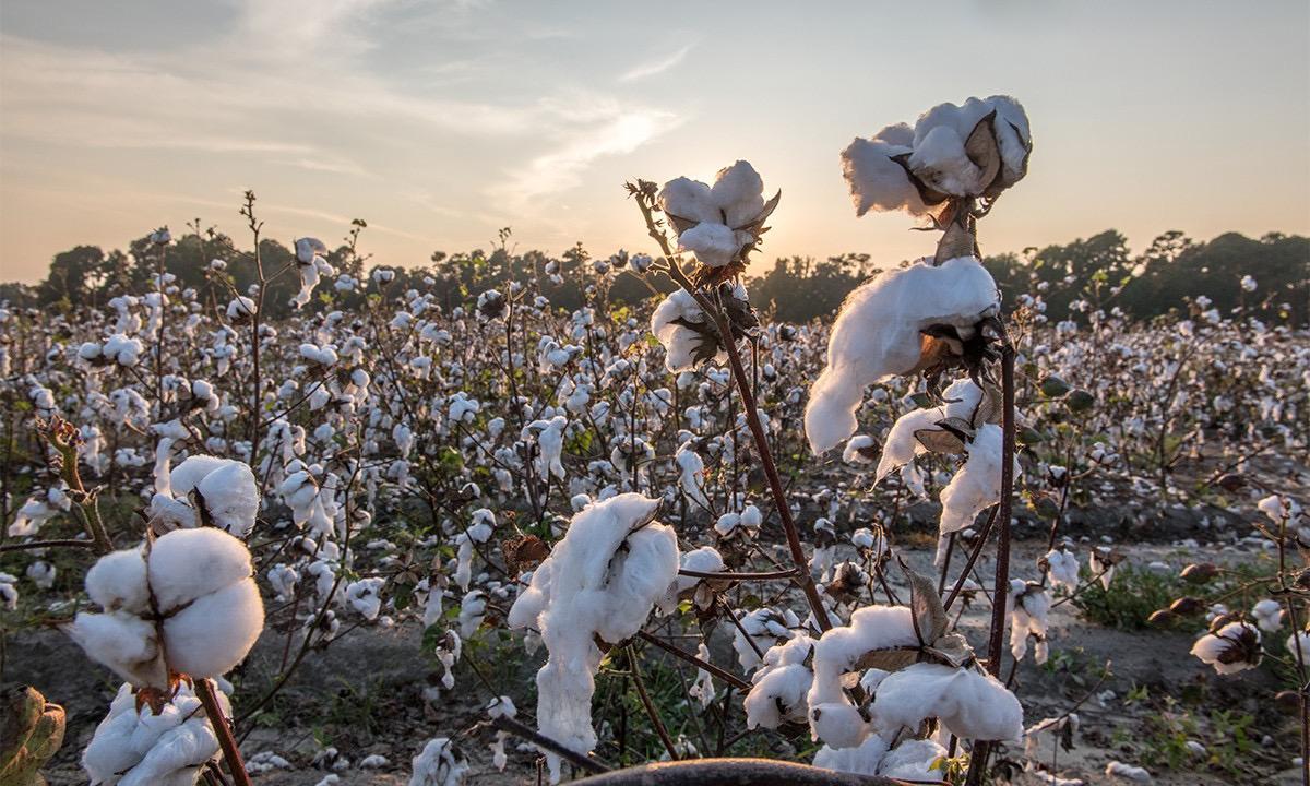 助力环保,THE NORTH FACE 携手科技公司 Indigo Ag 打造再生棉系列